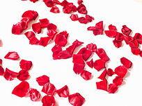 白背景红色花瓣字图片