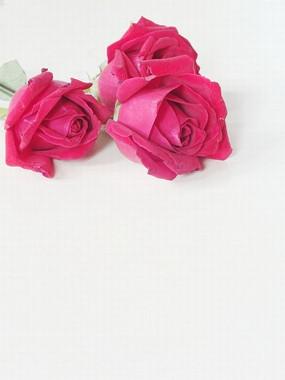 玫瑰花花束