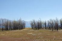 蓝天下大理洱海边的灌木和草地