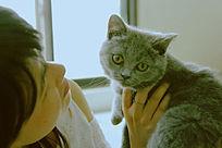 同学买的英国短猫