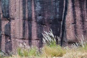 岩石和小草