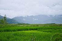 云南的绿色沼泽地