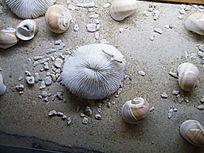 海滩贝壳图片