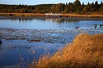 湖泊周围的枯草地