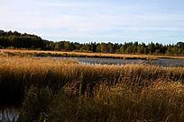 枯草丛生中的湖水