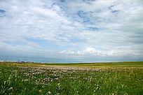 蓝天白云下开满鲜花的草原风光