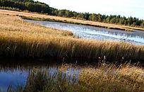 流淌在枯草丛中的湖水