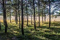 阳光照射的树林