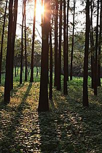 逆光下中森林里的倒影树丛树木