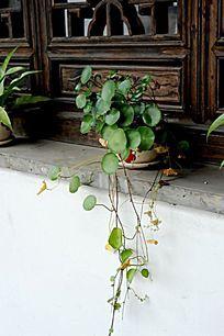 绿色植物小品 窗口摆设