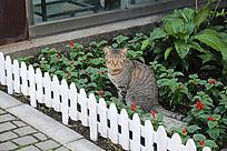 在花圃中坐着的猫