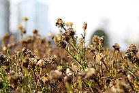 一片絮状植物草丛