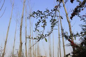 枯树和嫩芽