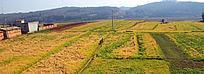 田园风光 丰收的麦田