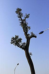 小树两枝芽