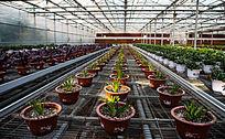 农业设施科学种植基地大棚