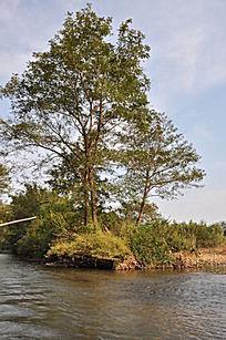 九曲溪岸边的树
