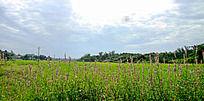 绿草丛中的盛开的一排鲜花