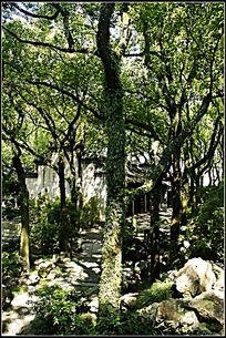 长满青苔绿植的树
