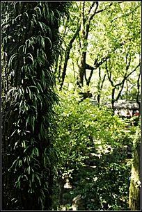 长满青苔绿植的树干
