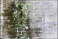 长满青苔和绿植的古代青砖围墙
