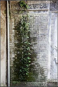 长满青苔和绿植的古代围墙