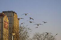 一群盘旋在城市上空的海鸥