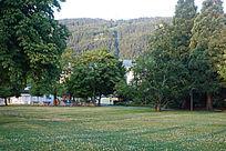 德国景观草地上的大树