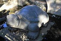 漂亮的乌龟石雕