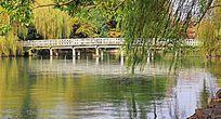 柳树遮掩下的杭州西湖风光