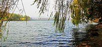 柳树遮掩下的西湖风光