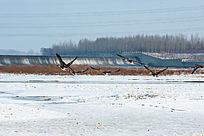 冬季野生鸟类