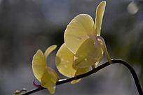 农业科技馆里黄色花卉
