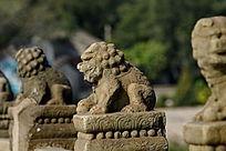 三只狮子撅屁股