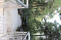 树木扶梯 公园风景