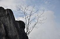 山崖边的树