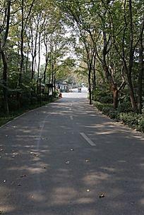 树林道路掠影
