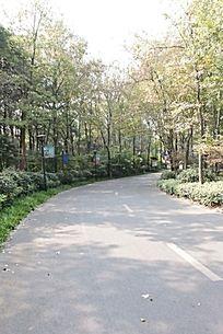 树林中转弯的公路