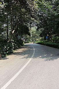 阳光下树林里的公路