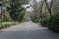 樱花树公路