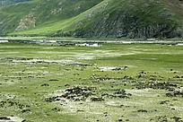 西藏蓝天白云的大草原牛群