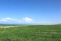 蔚蓝的青海湖绿草前景