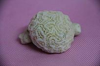 粉色背景下的珊瑚