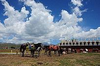 蓝天白云下的骏马