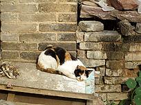 窝在墙角的猫