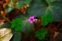 粉色小花朵