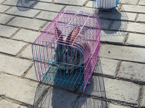笼子里的灰兔子
