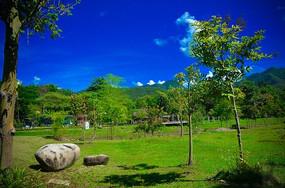 蓝天白云下的绿草地