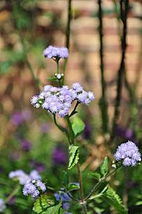 园中淡紫色的小野花