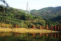 秋天的湖边和树
